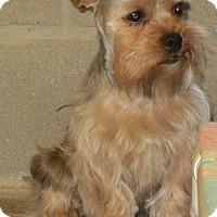 Adopt A Pet :: Sumac - Lubbock, TX