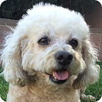 Adopt A Pet :: Buster - La Costa, CA