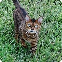 Adopt A Pet :: Tobi - Lantana, FL