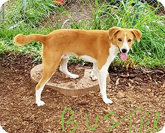 Hound (Unknown Type) Mix Dog for adoption in Lawrenceburg, Tennessee - Buster