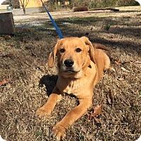 Adopt A Pet :: Twirl - Harrisonburg, VA