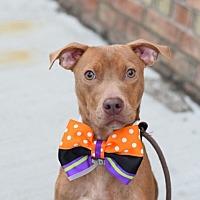 Adopt A Pet :: NINA BEENA - Boston, MA