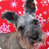 Adopt A Pet :: PEPPER:Lower Fees:Neutered - Red Bluff, CA