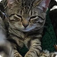 Adopt A Pet :: Boots & Buttons - Horsham, PA