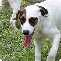 Adopt A Pet :: Neptune - Harmony, Glocester, RI