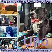 Adopt A Pet :: Uno - Hearne, TX