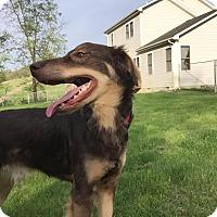 Adopt A Pet :: Rusty - Baltimore, MD