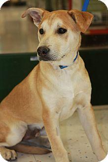 Golden retriever mix puppies for sale arizona