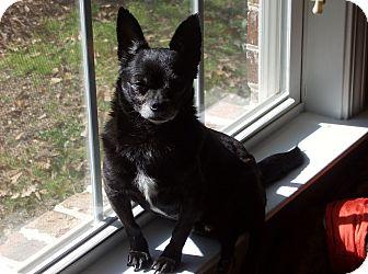 Chihuahua Mix Dog for adoption in Dothan, Alabama - Chance