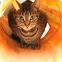 Adopt A Pet :: Cora - Medina, OH