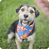 Adopt A Pet :: Will - Kingwood, TX