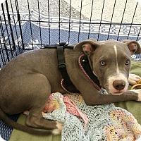 Adopt A Pet :: Matilda - Phoenix, AZ