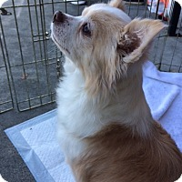 Adopt A Pet :: Wylie - Durham, NC