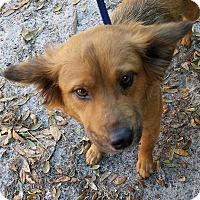 Adopt A Pet :: Missy - Gainesville, FL