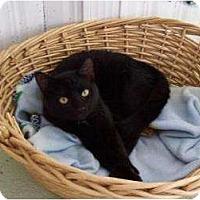 Adopt A Pet :: kenora - Brooksville, FL