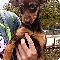 Adopt A Pet :: Odie - Gadsden, AL