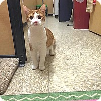 Adopt A Pet :: Angelito - Foothill Ranch, CA
