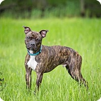 Adopt A Pet :: Axl - Warsaw, IN