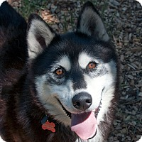 Adopt A Pet :: ALLIE-Adoption Pending - Boise, ID