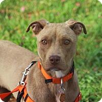 Adopt A Pet :: Glory-Adoption Pending - Pinehurst, NC