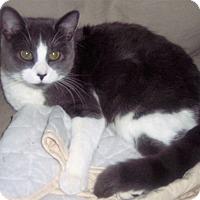 Adopt A Pet :: Maizy - brewerton, NY