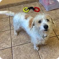 Adopt A Pet :: Shaggy 109848 - Joplin, MO
