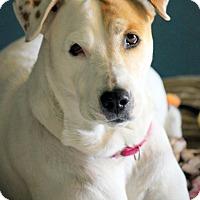 Adopt A Pet :: Sasha - Ft. Lauderdale, FL