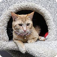 Adopt A Pet :: Alec - Creston, BC