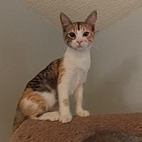 Adopt A Pet :: Fanny - Tampa, FL