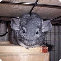 Adopt A Pet :: Tiki - Avondale, LA