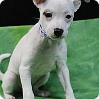 Adopt A Pet :: Harlowe - Wytheville, VA