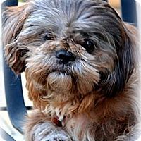 Adopt A Pet :: Charley-VA - Suffolk, VA