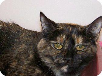 Domestic Shorthair Cat for adoption in Westville, Indiana - Esperanza
