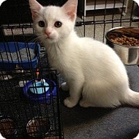Adopt A Pet :: Snow Babies - Sterling Hgts, MI