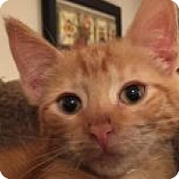 Adopt A Pet :: Tangy - East Hanover, NJ