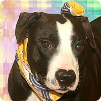 Adopt A Pet :: Telly - Cincinnati, OH