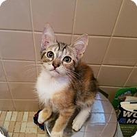 Adopt A Pet :: Twix - East Brunswick, NJ