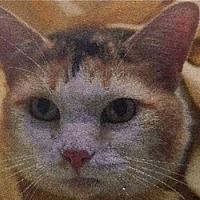 Adopt A Pet :: Sunshine - LaJolla, CA