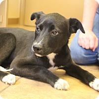 Adopt A Pet :: Aaron~ meet me! - Glastonbury, CT