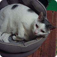 Adopt A Pet :: Prince - Bridgeton, MO