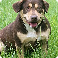 Rottweiler Mix Dog for adoption in Spring City, Pennsylvania - Mason