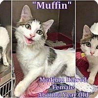 Adopt A Pet :: H-1 Muffin - Triadelphia, WV