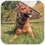 Photo 3 - Shepherd (Unknown Type) Mix Dog for adoption in Petaluma, California - Ginger