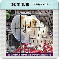 Adopt A Pet :: Kyle - Studio City, CA