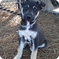 Adopt A Pet :: Bentley - Athens, GA