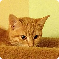 Adopt A Pet :: Lizzy and Mary - Richfield, OH
