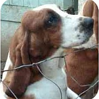 Adopt A Pet :: Cowboy II - Seattle, WA