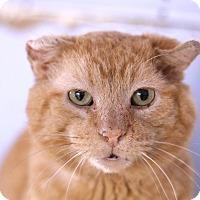 Adopt A Pet :: Angiolo Achini - Chicago, IL