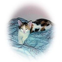 Adopt A Pet :: Lola - Olmsted Falls, OH