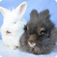 Adopt A Pet :: King Tut & Wolfman - Fountain Valley, CA